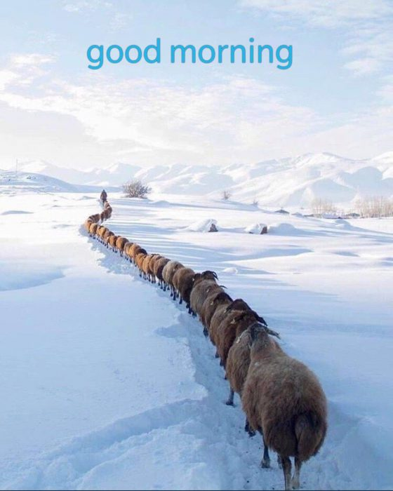 Animals Greeting Good images good morning Images - Animals Greeting Good images good morning Images