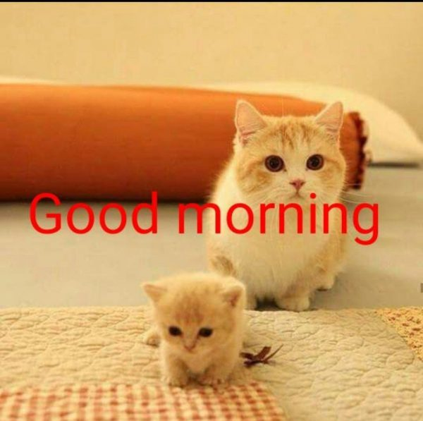 Animals Greeting Good morning good morning Images - Animals Greeting Good morning good morning Images