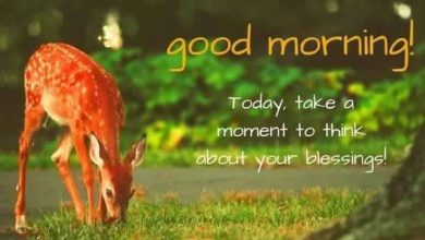 Animals Greeting Good morning great morning Images 390x220 - Animals Greeting Good morning great morning Images