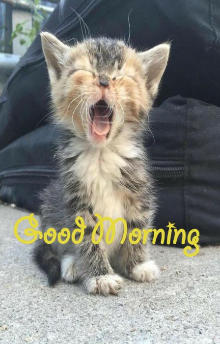 Animals Greeting Good morning greetings image Images - Animals Greeting Good morning greetings image Images