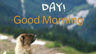 Animals Greeting Good morning love images Images 390x220 - Animals Greeting Good morning love images Images