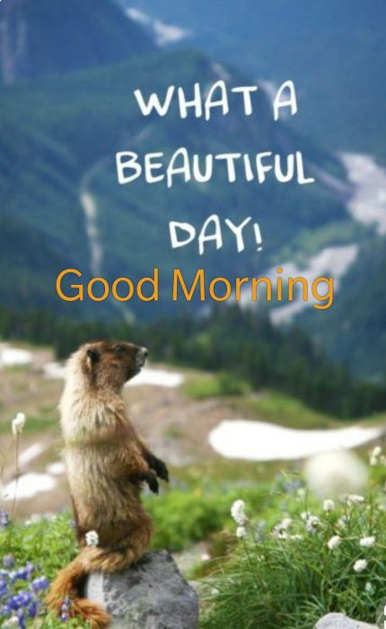Animals Greeting Good morning love images Images - Animals Greeting Good morning love images Images