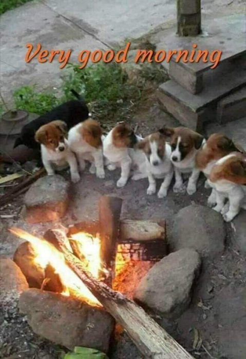 Animals Greeting Good morning time Images - Animals Greeting Good morning time Images