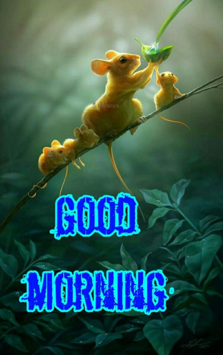Animals Greeting Good morning wishes image Images - Animals Greeting Good morning wishes image Images