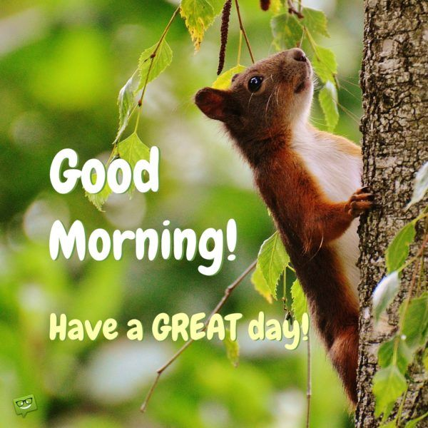 Animals Greeting Good morning with love Images - Animals Greeting Good morning with love Images