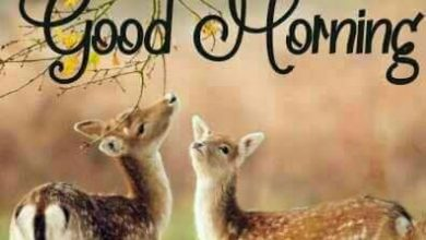 Animals Greeting Great morning Images 390x220 - Animals Greeting Great morning Images