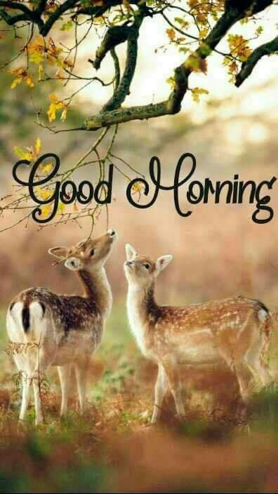 Animals Greeting Great morning Images - Animals Greeting Great morning Images