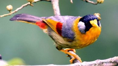 Birds a good morning images Greetings Images 390x220 - Birds a good morning images Greetings Images