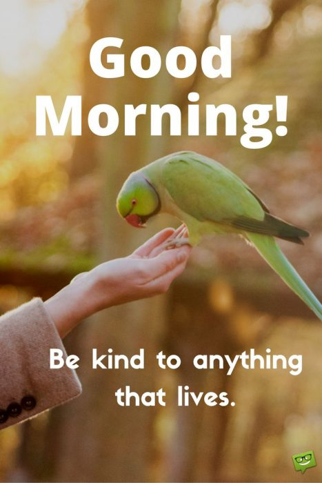Birds good morning greetings photos Greetings Images - Birds good morning greetings photos Greetings Images