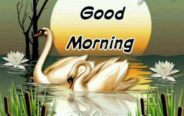 Birds Good Morning Images Greetings Images Greetings Images