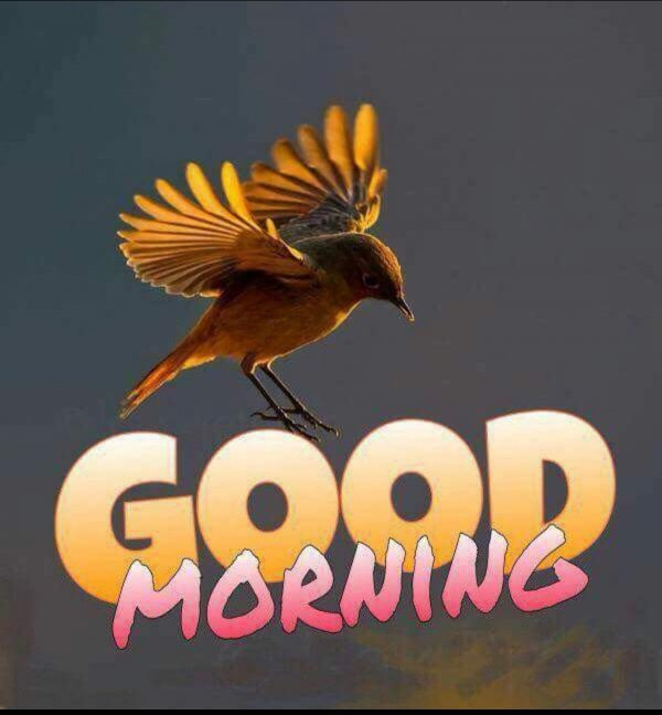 Birds good morning photos Greetings Images - Birds good morning photos Greetings Images