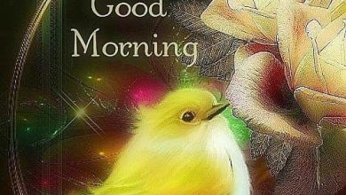Birds good morning today image Greetings Images 390x220 - Birds good morning today image Greetings Images