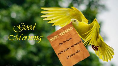 Birds good morning today images Greetings Images 390x220 - Birds good morning today images Greetings Images