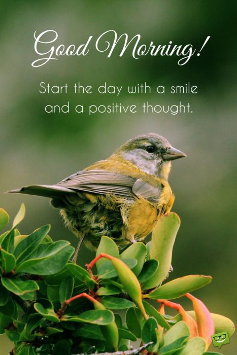 Birds great day morning images Greetings Images - Birds great day morning images Greetings Images