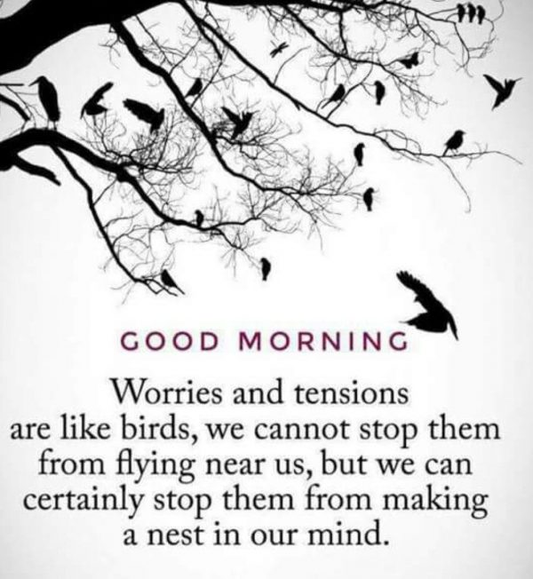 Birds great morning photos Greetings Images - Birds great morning photos Greetings Images
