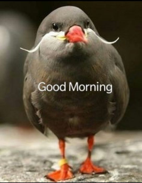 Birds happy good morning image Greetings Images - Birds happy good morning image Greetings Images