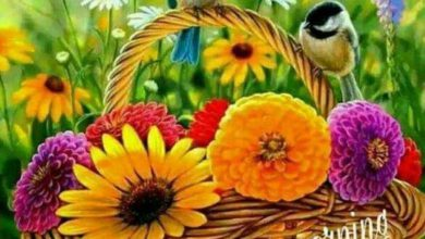 Birds image Greetings Images 390x220 - Birds image Greetings Images