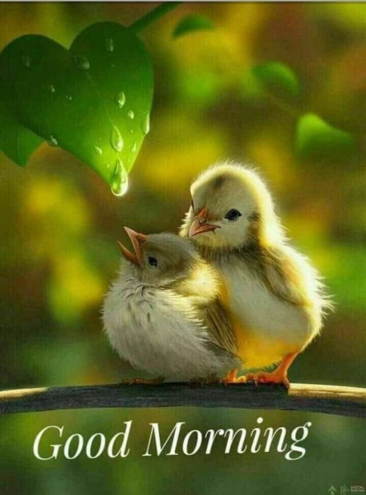 Birds morning wishes image Greetings Images - Birds morning wishes image Greetings Images