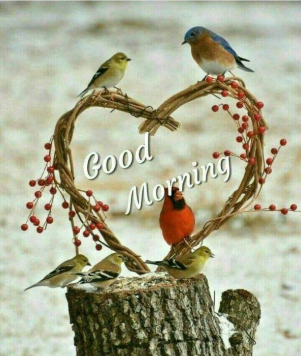 Birds morning wishes photo Greetings Images - Birds morning wishes photo Greetings Images