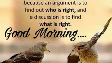 Birds new good morning image Greetings Images 390x220 - Birds new good morning image Greetings Images