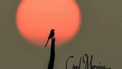 Birds sweet morning images Greetings Images 390x220 - Birds sweet morning images Greetings Images