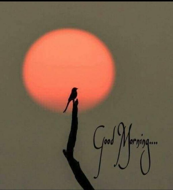 Birds sweet morning images Greetings Images - Birds sweet morning images Greetings Images