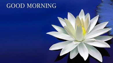 Flower good morning image Greetings Images 390x220 - Flower good morning image Greetings Images