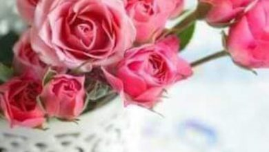 Flower good morning photo Greetings Images 390x220 - Flower good morning photo Greetings Images