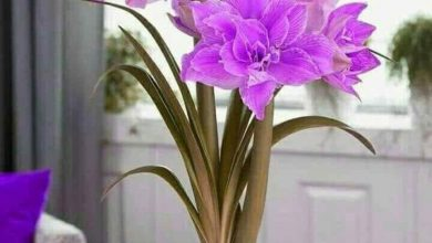 Flower happy good morning image Greetings Images 390x220 - Flower happy good morning image Greetings Images