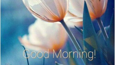 Flower happy morning images Greetings Images 390x220 - Flower happy morning images Greetings Images