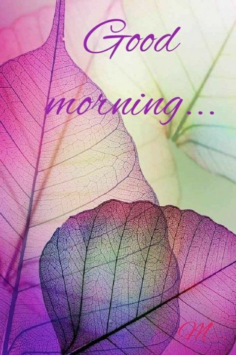 Flower morning wishes images Greetings Images - Flower morning wishes images Greetings Images