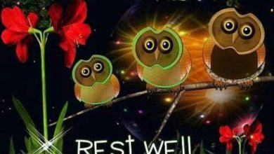 Good night wishes sms image 390x220 - Good night wishes sms image