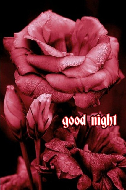Goodnight comment image - Goodnight comment image
