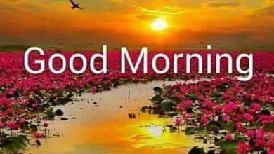 Morning wishes farm image Greetings Images 390x220 - Morning wishes farm image Greetings Images