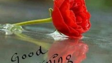 Rose good day morning images Greetings Images 390x220 - Rose good day morning images Greetings Images