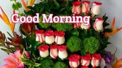 Rose good morning image Greetings Images 390x220 - Rose good morning image Greetings Images