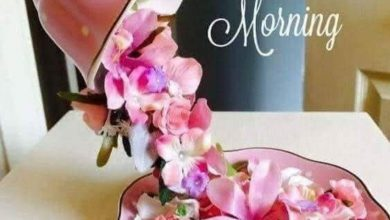 Rose happy morning photo Greetings Images 390x220 - Rose happy morning photo Greetings Images