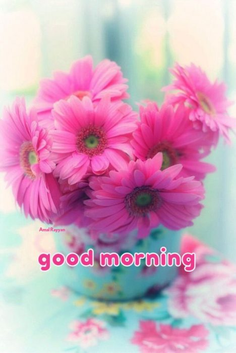 Rose morning wishes images Greetings Images - Rose morning wishes images Greetings Images