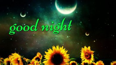 Saying goodnight quotes image 390x220 - Saying goodnight quotes image