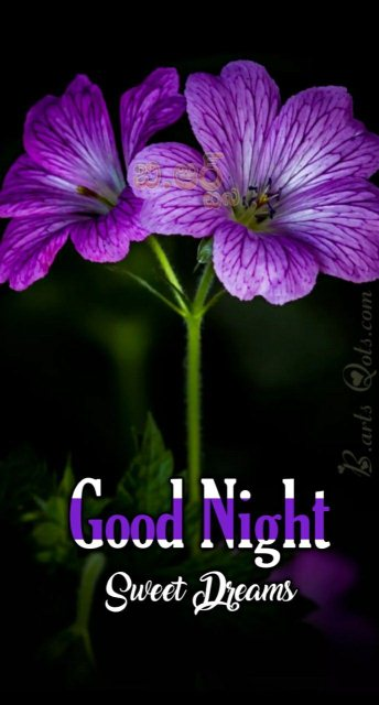 Sweet good nite message image - Sweet good nite message image