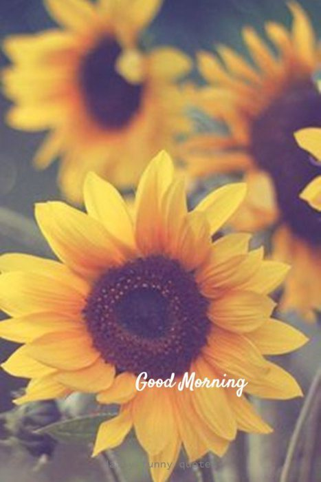 Today good morning Images - Today good morning Images