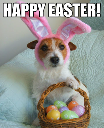 Funny Easter Quotes For Cards - Funny Easter Quotes For Cards