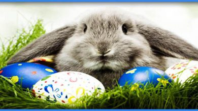 Happy Easter To My Family 390x220 - Happy Easter To My Family