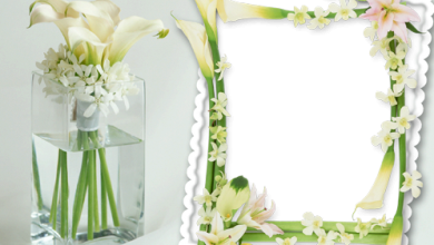Delicate Flowers photo frame 390x220 - Delicate Flowers photo frame