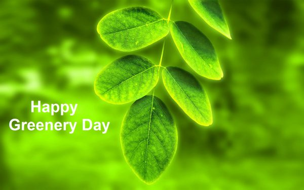 Happy Greenery Day - Happy Greenery Day