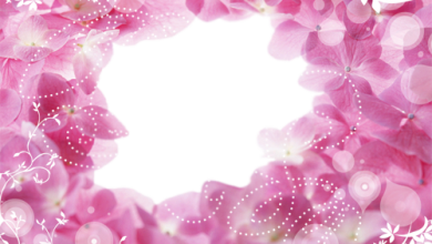 Hole In Pink Flowers photo frame 390x220 - Hole In Pink Flowers photo frame