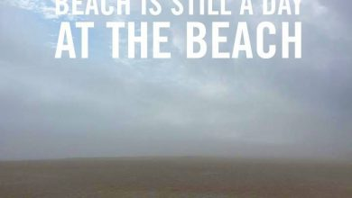 Funny Summer Holiday Quotes image 390x220 - Humorous Summer time Vacation Quotes picture